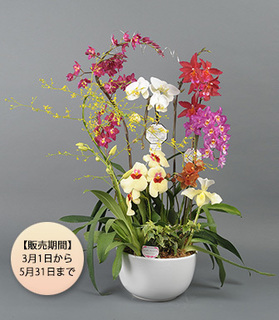 【期間限定】ランミックス_グレーシャス160226.jpg